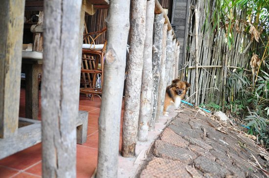 Palm Village Resort & Spa: Puppies of the property