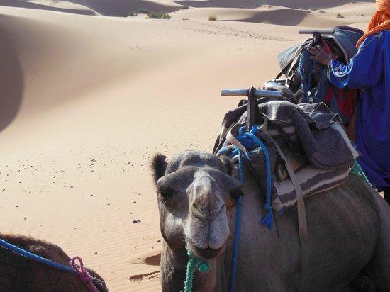 Ksar Bicha: Viaggio....