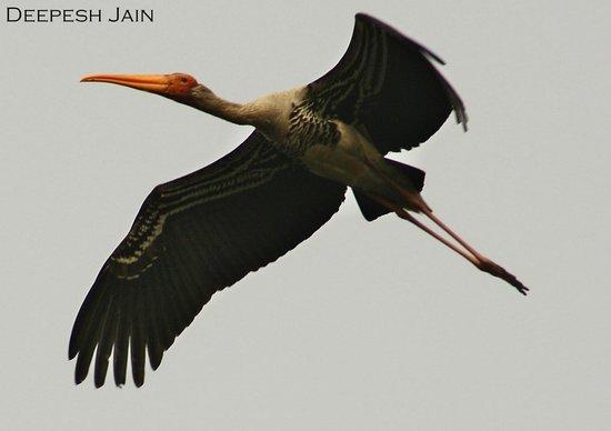 Sultanpur National Park Bird Sanctuary: Taken at Sultanpur Bird Century