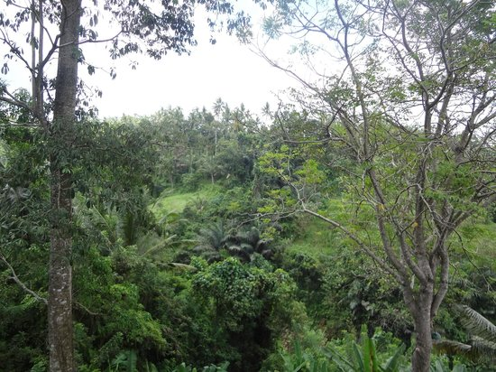Beji Ubud Resort : jungle