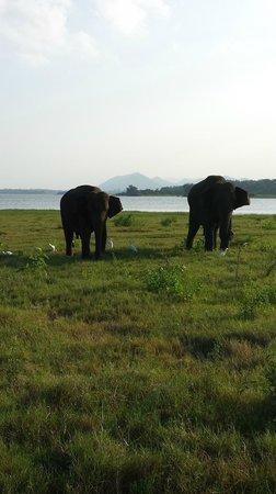 Minneriya National Park: gf & bf :)