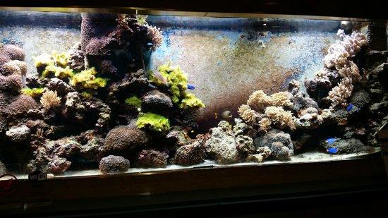 Radisson Blu Scandinavia Hotel, Copenhagen: Fish tank in the reception area