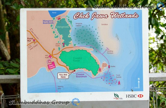 Chek Jawa: We are here... ...