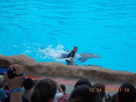 Loro Parque: dolphin show