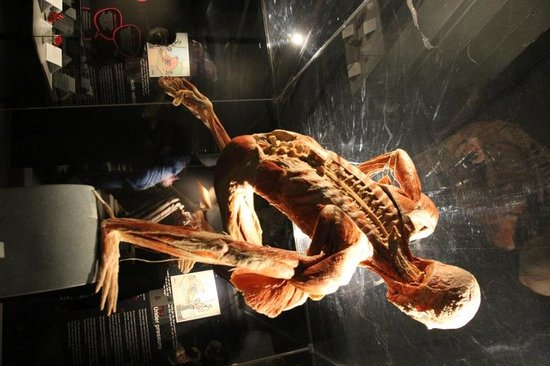 Body Worlds : Athlete