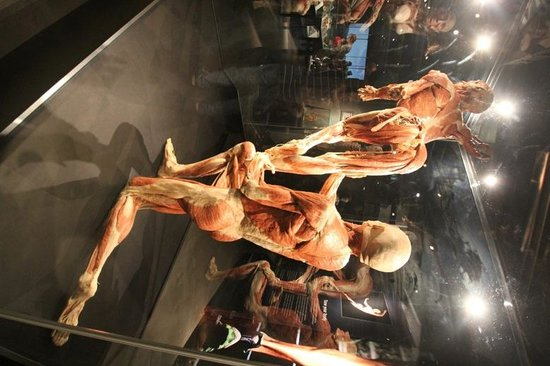 Body Worlds: The Happiness Project : Dancers