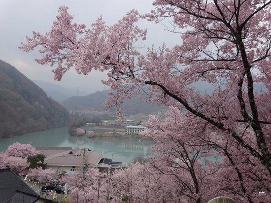 Takato Sakura Hotel: 小さい湖