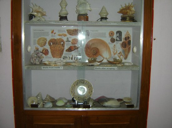 Alice Garg National Seashells Museum : Some exhibits