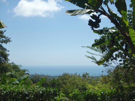 Oxygen Jungle Villas: View from our Ocean View Villa (no. 4)