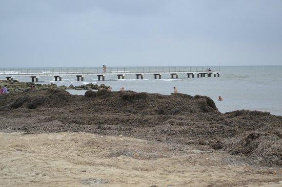 El Mouradi Djerba Menzel : Montagna di alghe in spiaggia