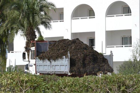 El Mouradi Djerba Menzel : Sgombero alghe dalla spiaggia