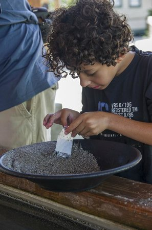 Britannia Mine Museum: Gold panning is fun and also an opportunity to teach the kids about the gold rush period.
