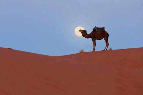 Хассилабид, Марокко: camel bivouac merzouga
