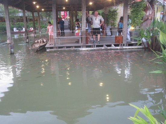 Siam Niramit Phuket : Lots of fish to feed in the Traditional Thai Village