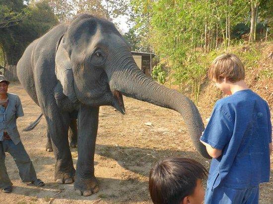 Thai Elephant Home: Feeding elephants bananas!