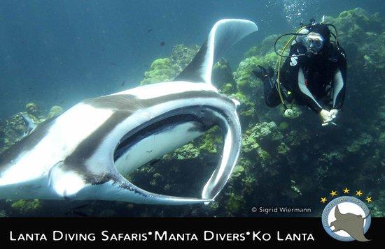 Lanta Diving Safaris: Manta Show