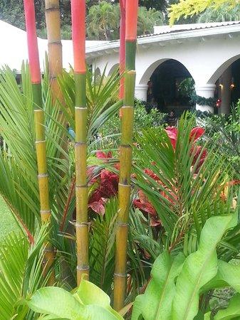 St. James's Club Morgan Bay: Gartenanlage sehr gepflegt