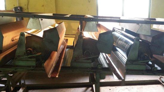 Handunugoda Tea Estate: machine