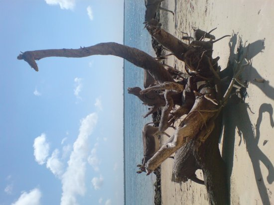 Lamu House Beach Club : Shela Beach, opposite Manda island
