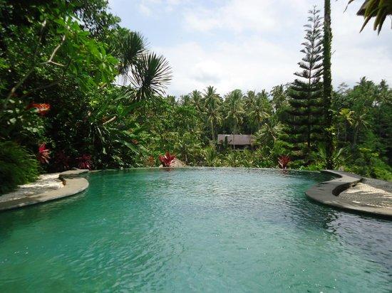 Graha Moding Villas: love this petite pool..