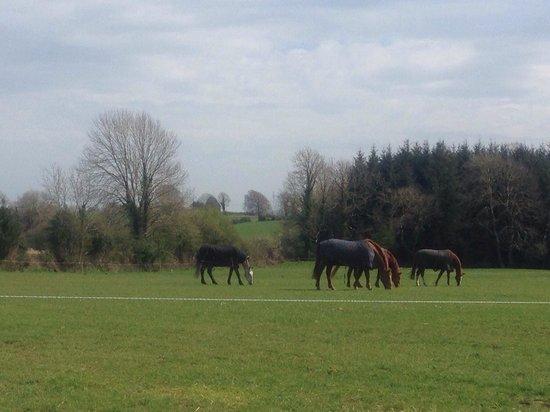 Flowerhill Equestrian Centre: Pferde auf der Koppel