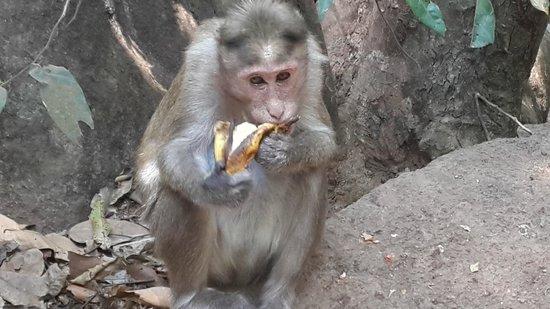 Sea Breeze Village: Бананы всем по душе