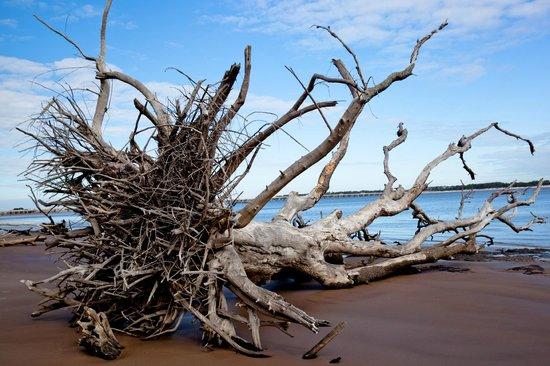 Is There A Beach On Big Talbot Island Fl
