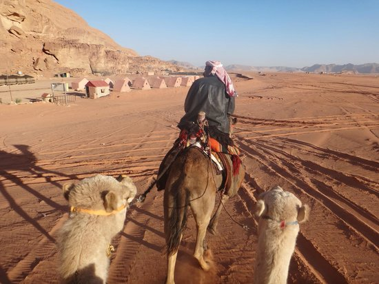 Captain's Desert Camp: Camel Ride in the day