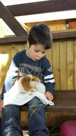 Adventure Wonderland : youngest loved the animals