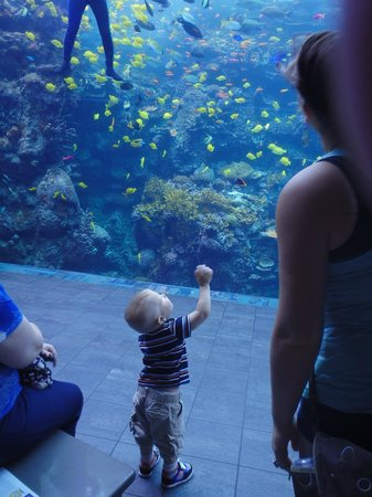 Georgia Aquarium: Looking at the fish.