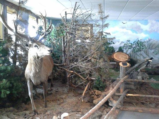 Latteria di Livigno: Cervo imbalsamato