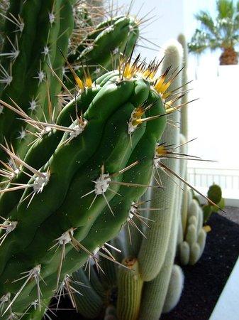 Hotel Lanzarote Village: Cactus garden