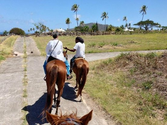 Nevis Equestrian Centre: April 2014