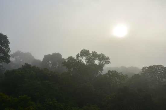 Tambopata Research Center : Foggy morning atop the Canopy Tower at Rufugio Amazonas