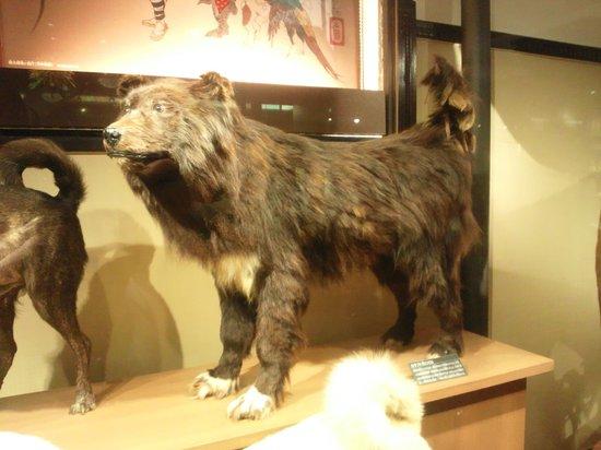 Museo Nacional de Ciencia: はく製