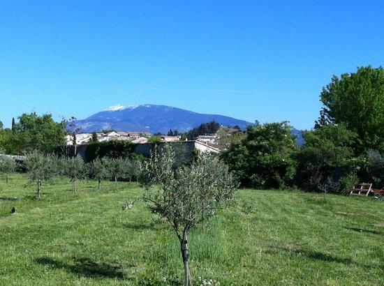 Les tilleuls d'Elisee: Blick vom Garten auf den Mont Ventoux