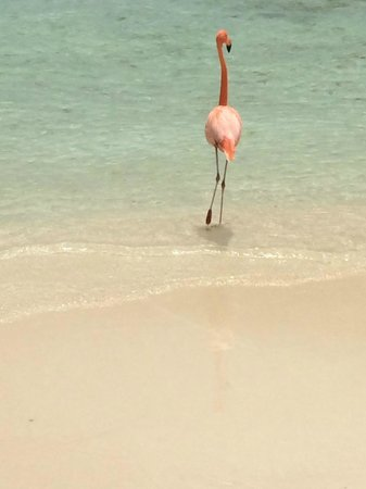 Renaissance Aruba Resort & Casino : Adults Only - Flamingo Beach on Private Island