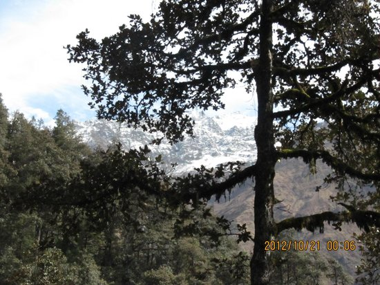 Yamunotri Temple : flora and fauna in the trekking way