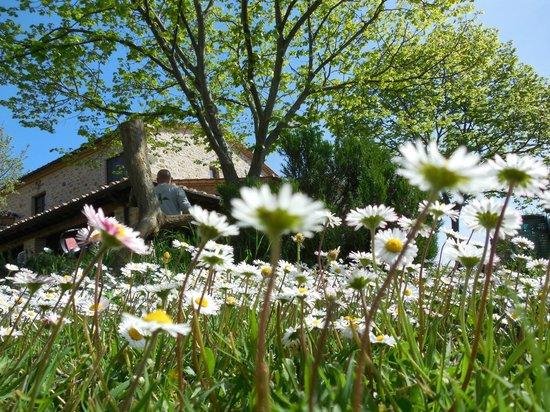 Salaiolo 176 Azienda Agricola: Nel giardino