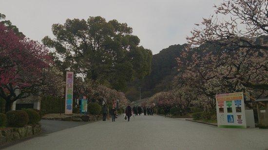 Dazaifu Temman-gu: Way to the Kyushu National Museum