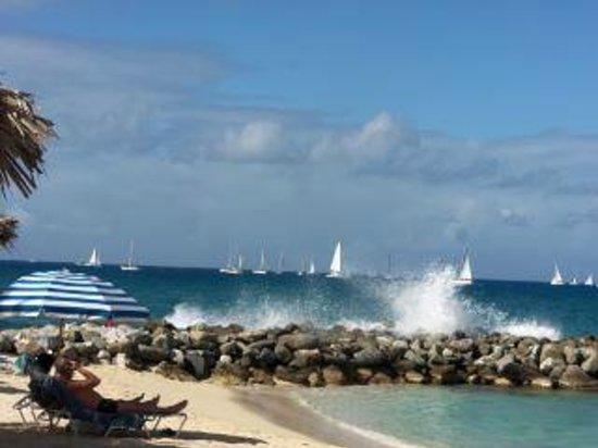 Flamingo Beach Resort: Regatta photo overlooking beach and Caribbean