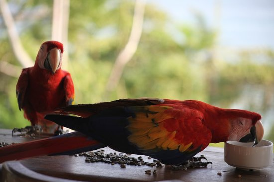 Lookout Inn Lodge : Greetings from Lookout Inn, Carate, Costa Rica