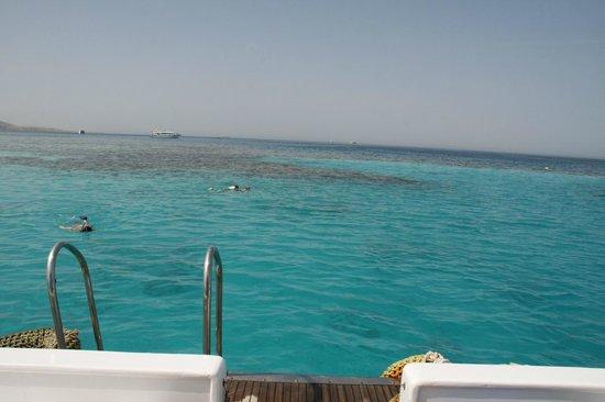 Mahmya Island : reef