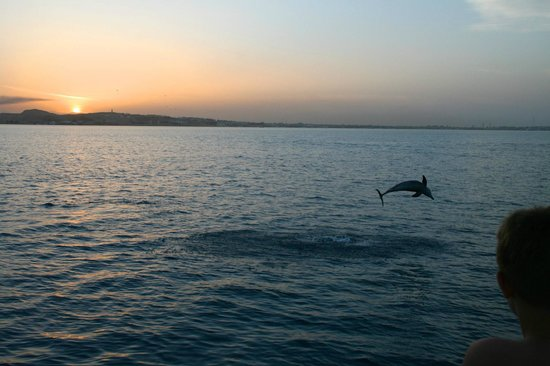 Mahmya Island : dolphins on way back