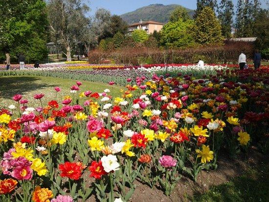 Lake Orta : Villa Taranto settimana dei tulipani