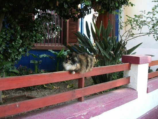 Residencia en El Cerro: Resident cat