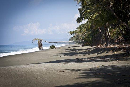 El Remanso Lodge: beach
