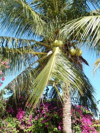 Victoria Phan Thiet Beach Resort & Spa: tremendous views 2