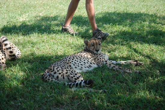 Zulu Nyala Game Lodge: Cheeta Rehab