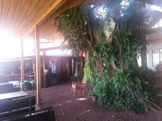 Adventure Park and Hotel Vista Golfo: El arbol de la recepción